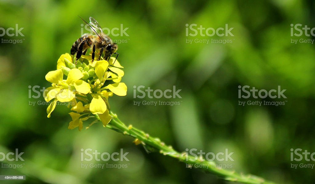 Bee on yellow flower stock photo
