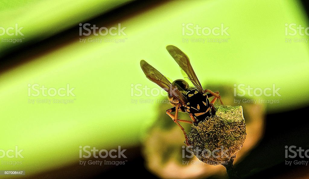 Bee or Wasp stock photo