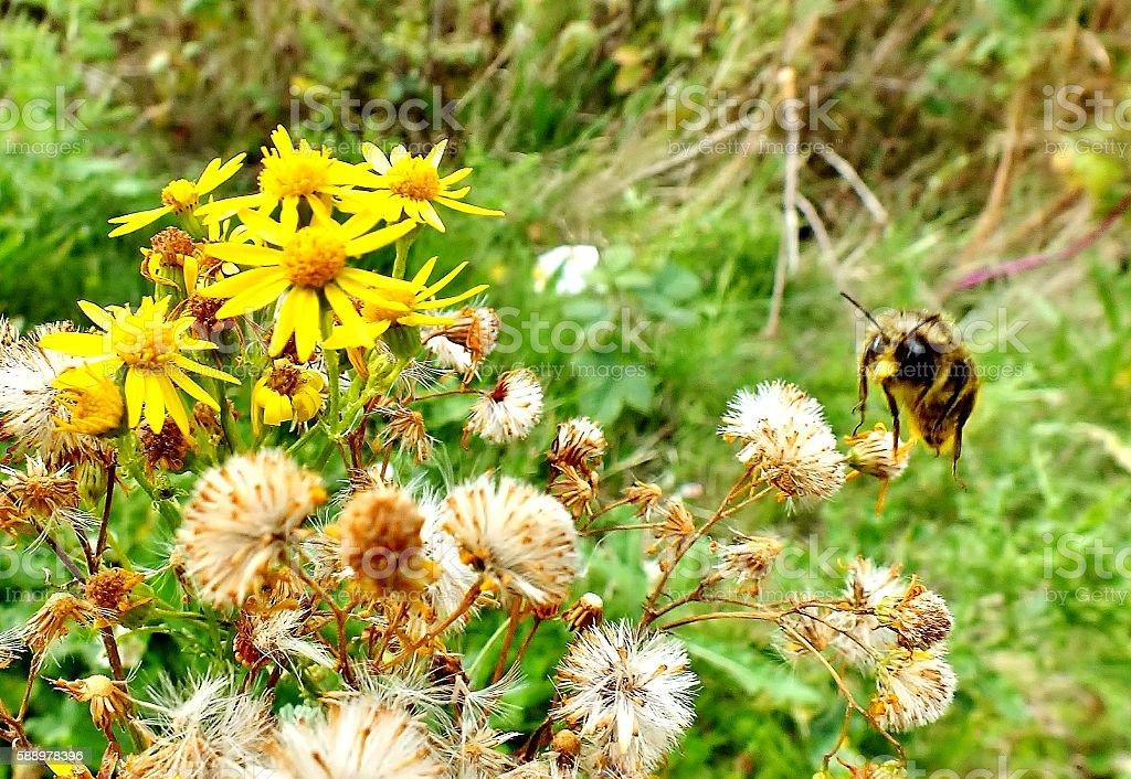 Bee Passing Flowers stock photo