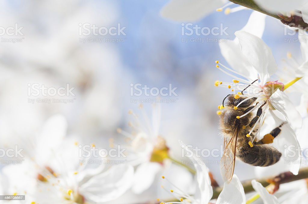Bee pollinating a flower. stock photo