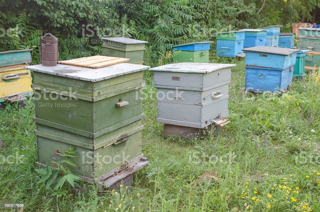 bee proofs with honey on an apiary stock photo