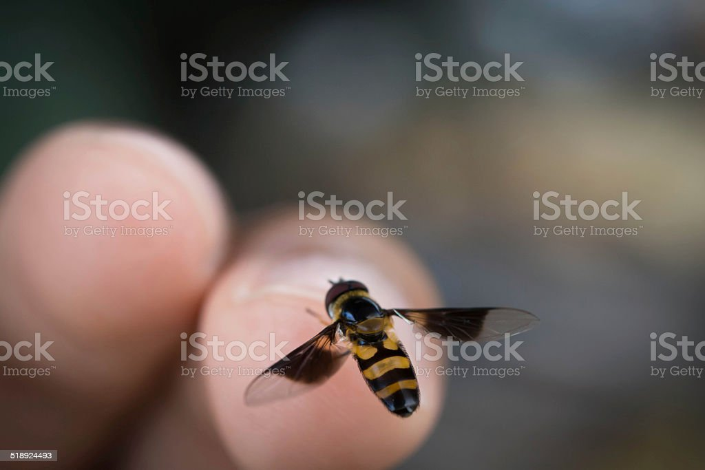 Bee sting stock photo