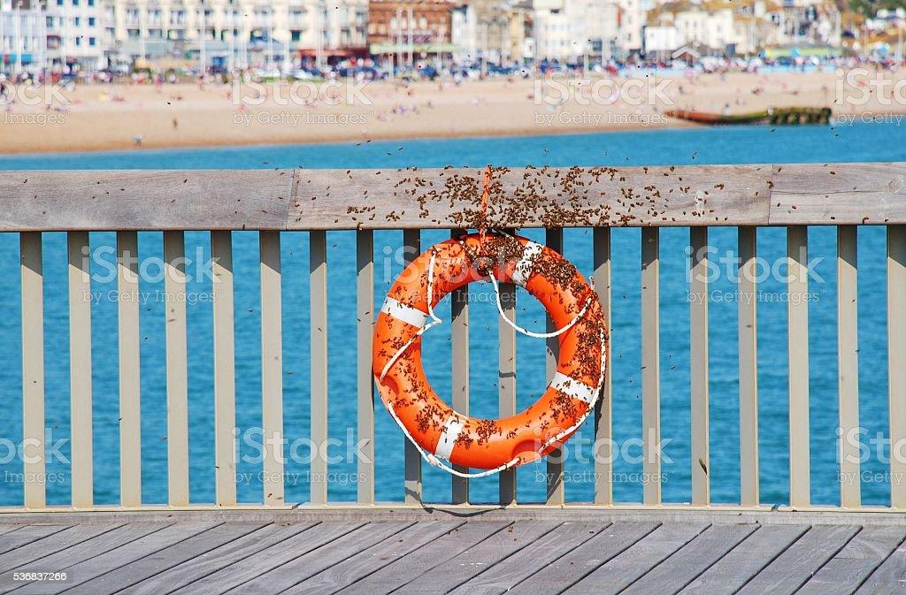 Bee swarm on Hastings pier stock photo