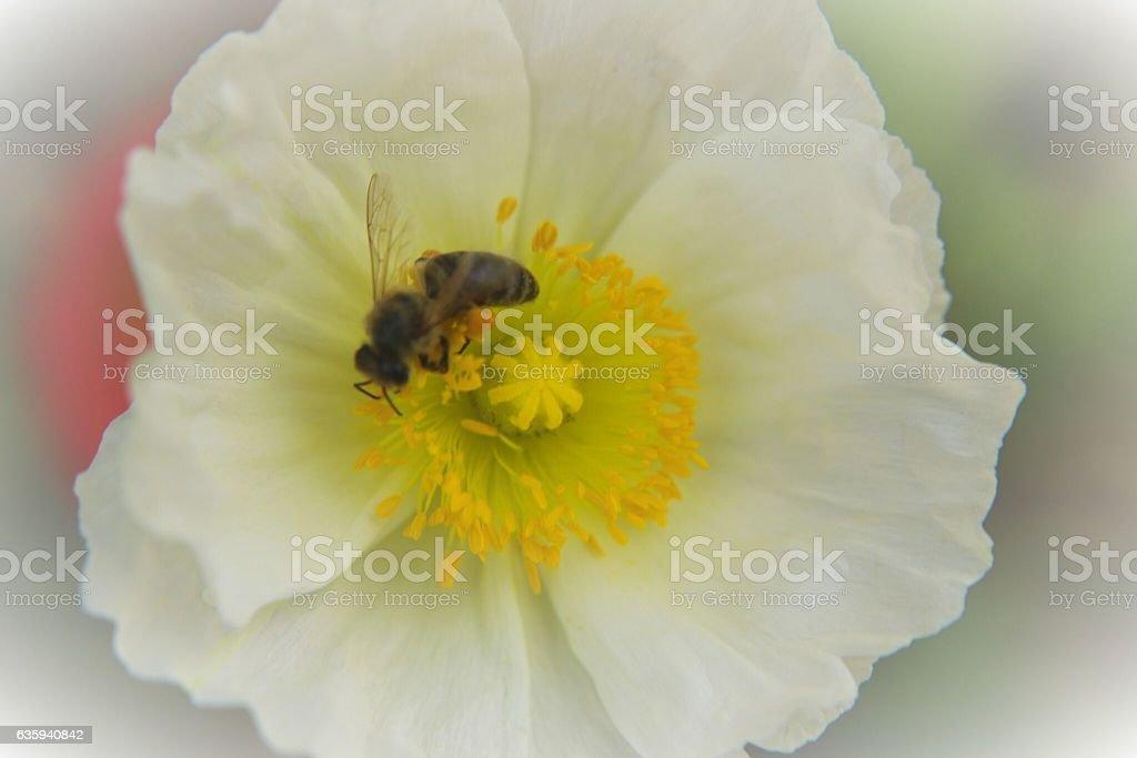 Bee Sweet stock photo