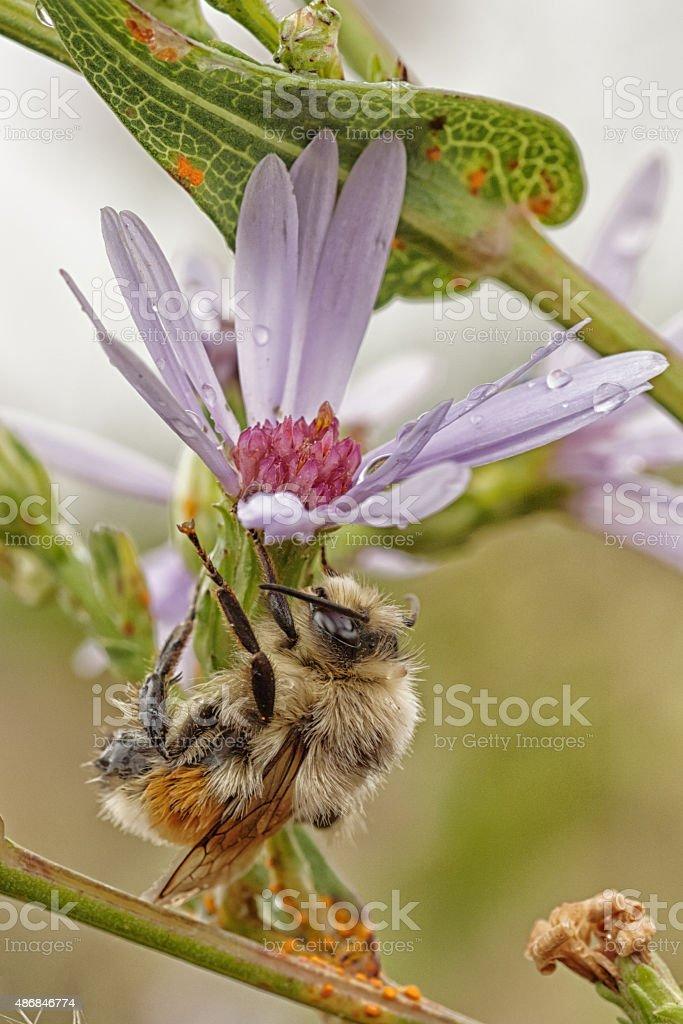 Bee Under a Flower Umbrella stock photo