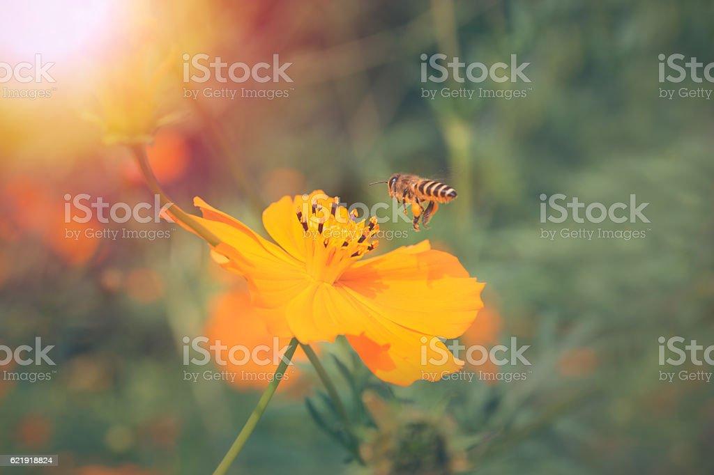 Bee with sun stock photo