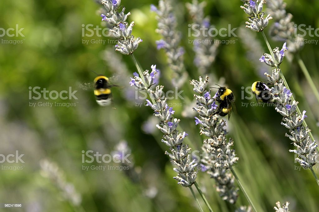 bee working stock photo