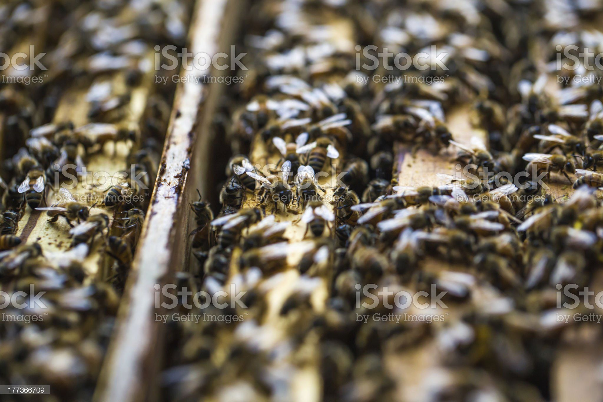 beebox royalty-free stock photo