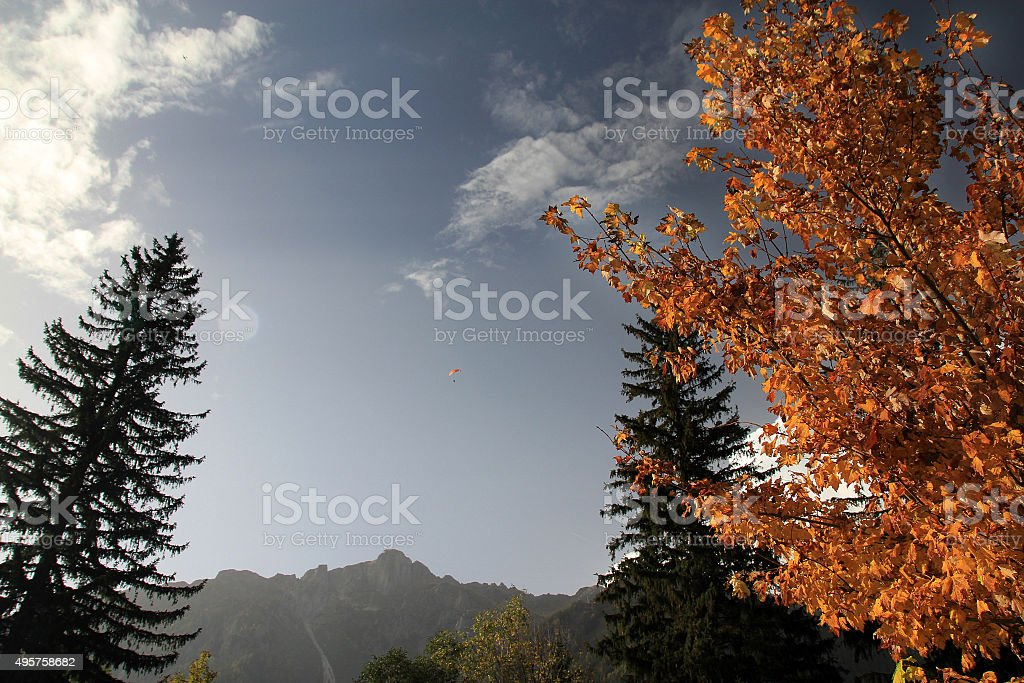 Beech and pine trees in Chamonix, France in autumn stock photo