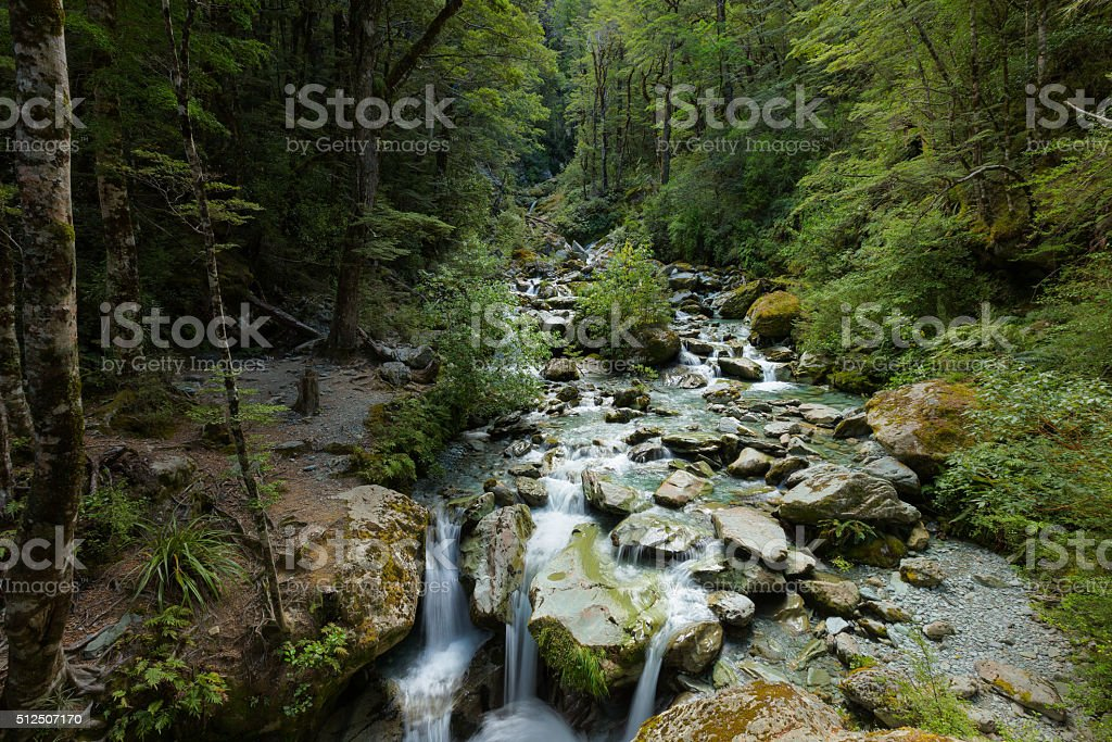 beech forest and small waterfall stock photo