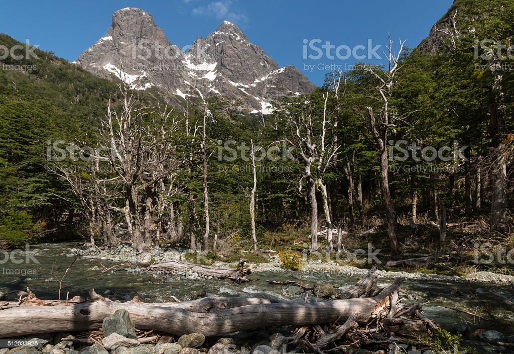 beech forest in Nahuel Huapi National Park stock photo