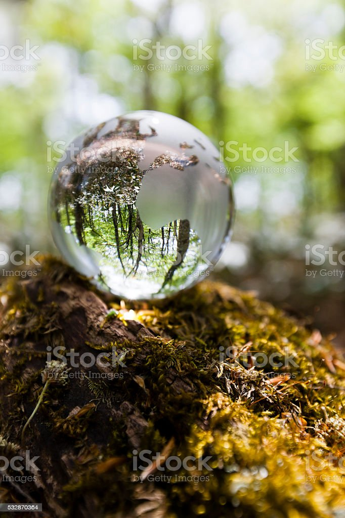 Beech Forest Through Glass Globe stock photo