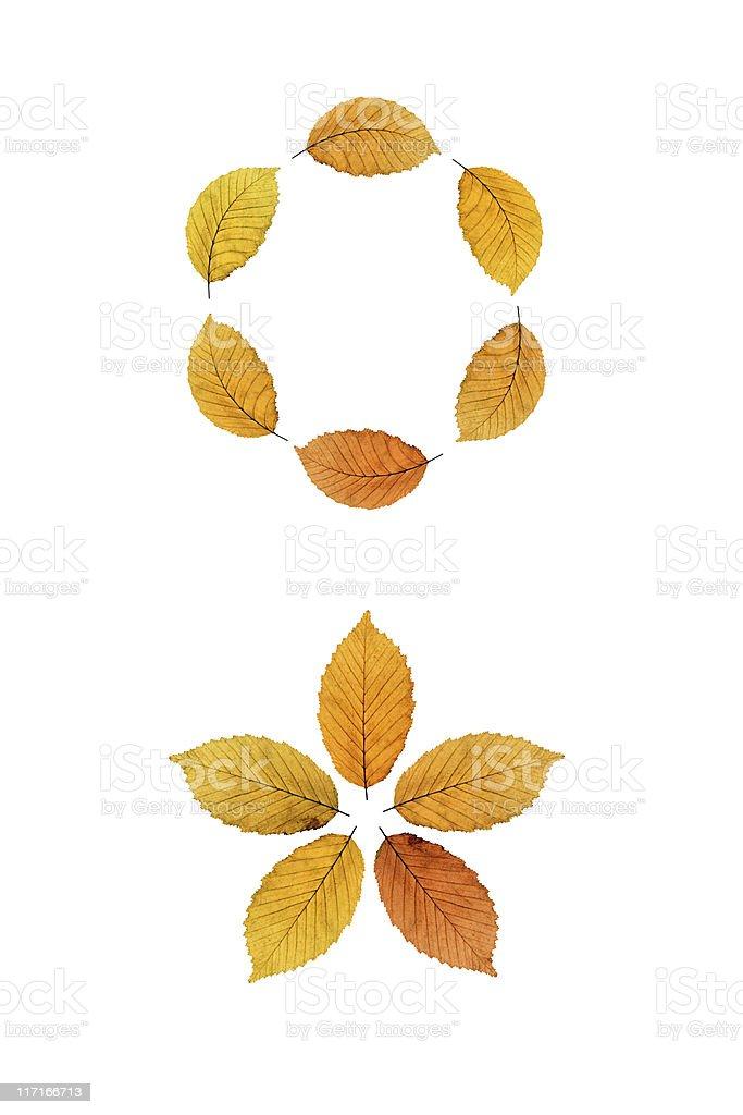 Beech Leaves Pattern XXL royalty-free stock photo