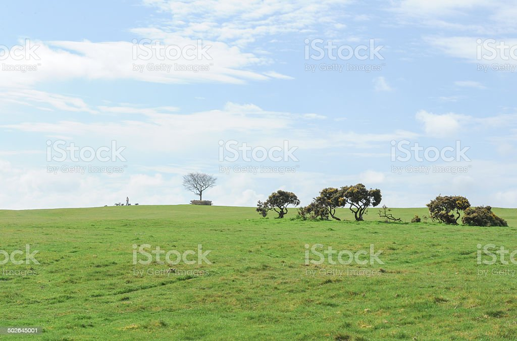 Beech Tree Memorial on Cleeve Common in the Cotswolds stock photo