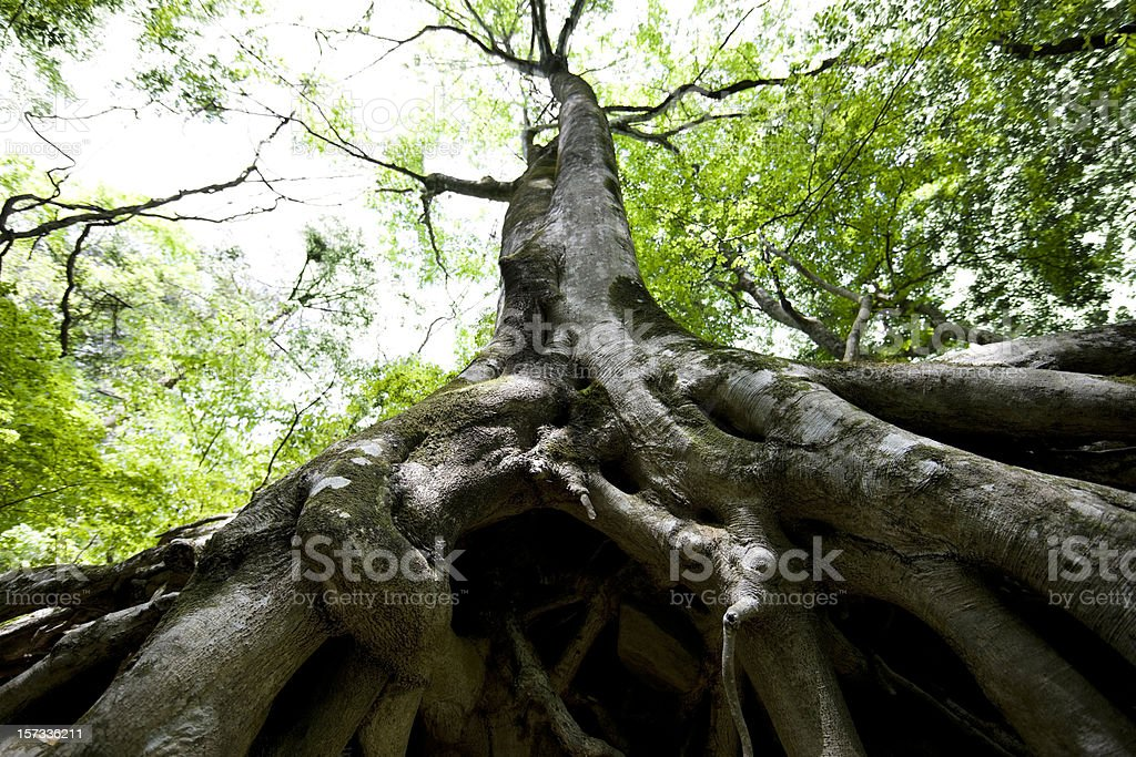 Tree roots detail