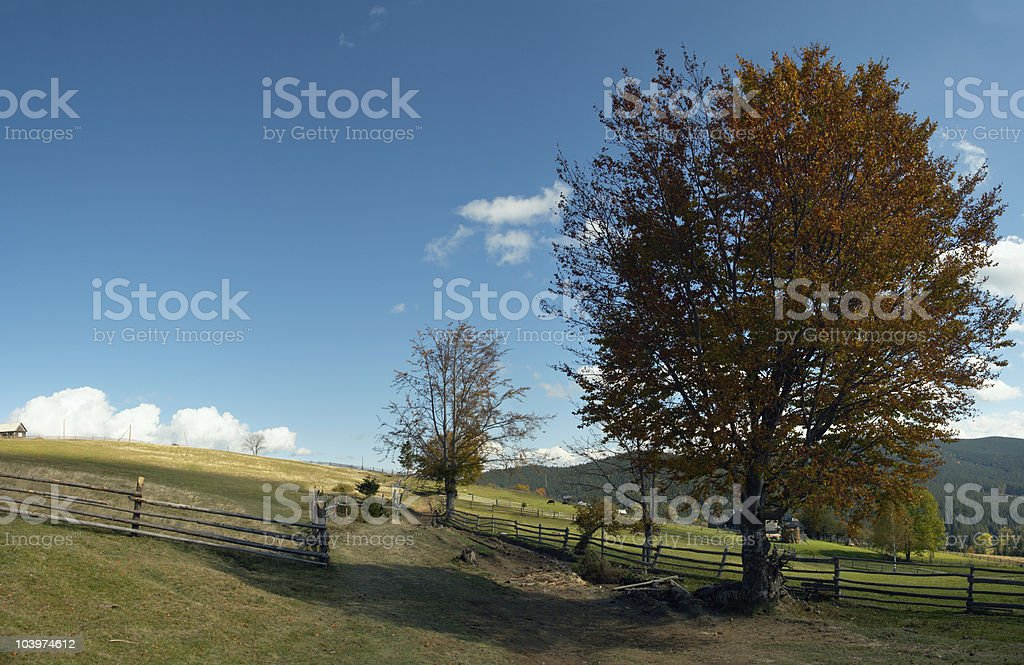 beech-tree near path royalty-free stock photo
