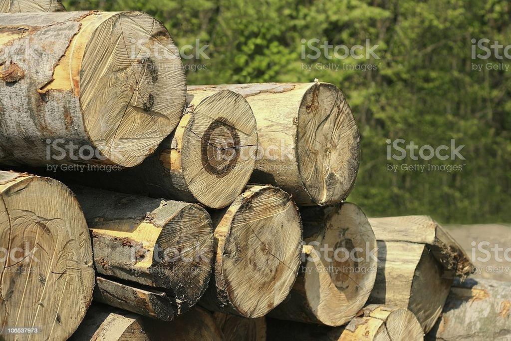 Beechwood stock photo
