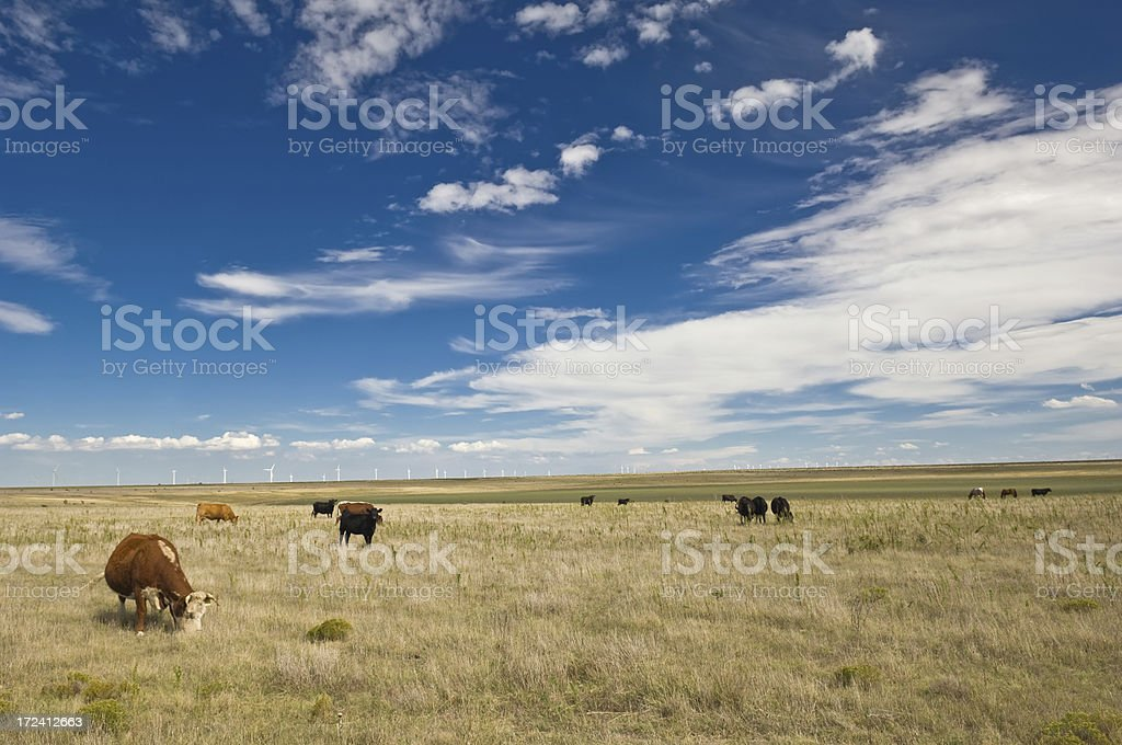 Beef and Electricity Five royalty-free stock photo