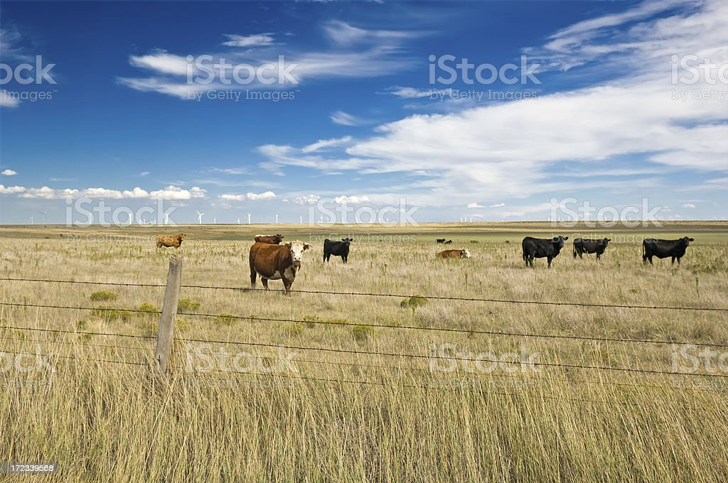 Beef and Electricity Seven stock photo