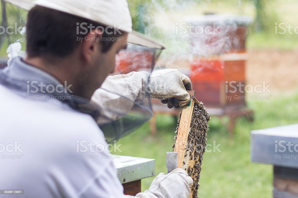 beehive beekeeper inspects royalty-free stock photo