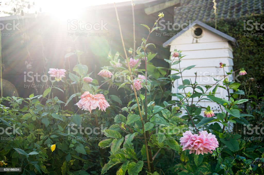 beehive behind flowers and plants stock photo