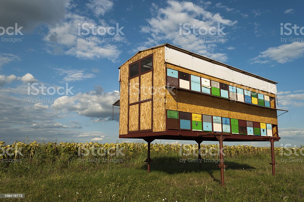 Beehive by sunflower field royalty-free stock photo