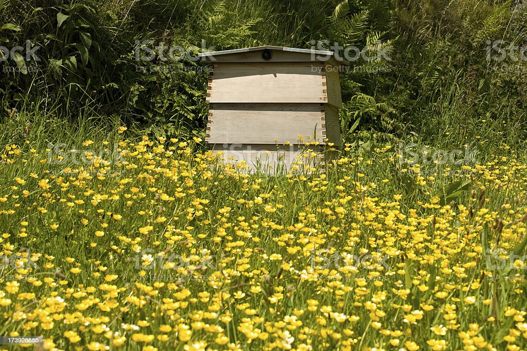 beehive in a field royalty-free stock photo