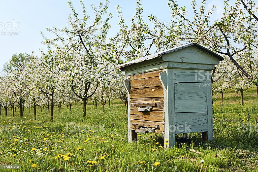 Beehive in blooming orchard royalty-free stock photo