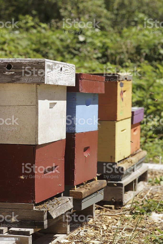 Beehive royalty-free stock photo