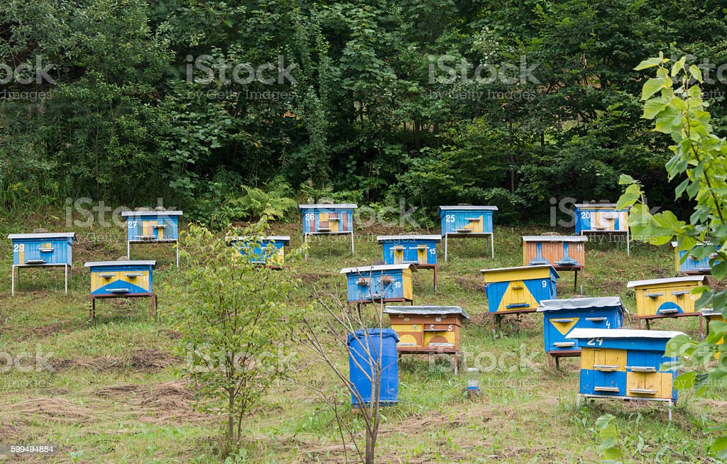 Beehives among trees stock photo