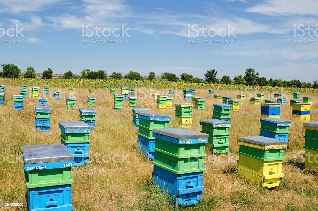 Beehives and sunflowers in a field in the countryside stock photo