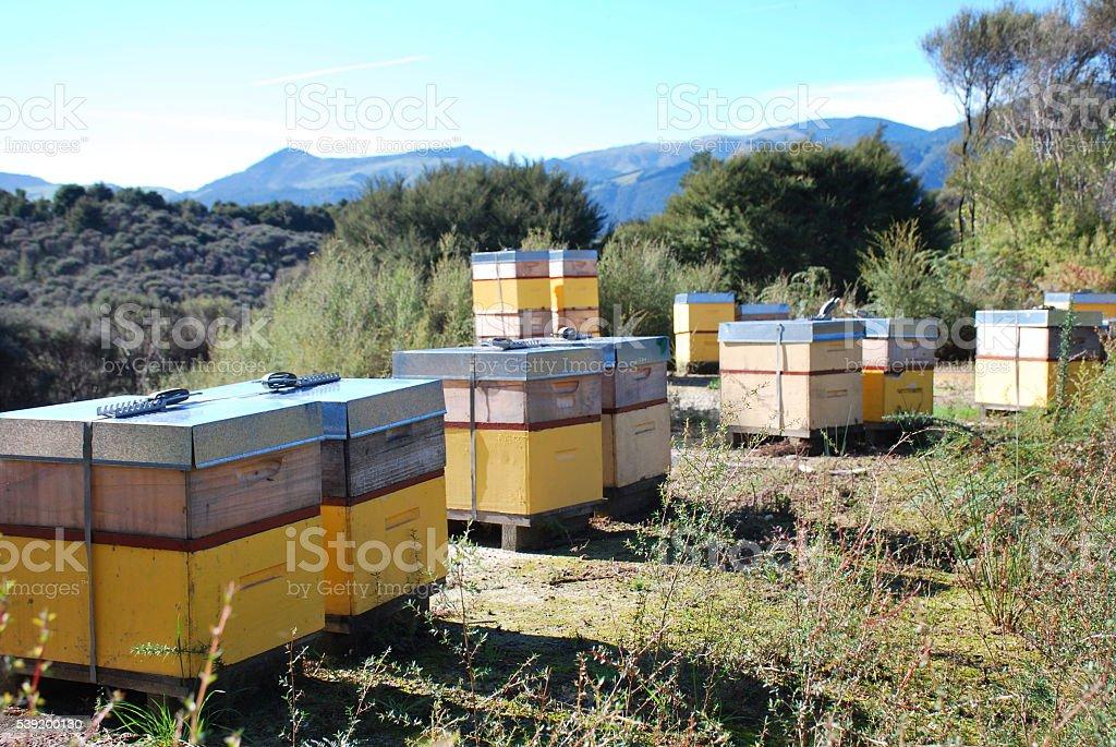 Beehives in a Manuka Plantation stock photo