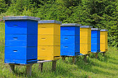 Beehives in a meadow near the forest