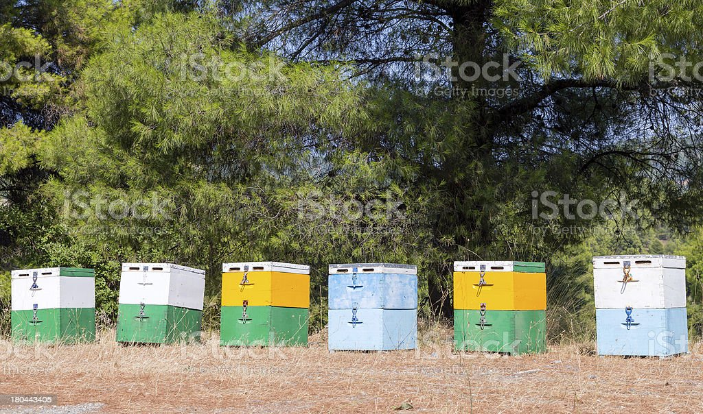 Beehives in forest royalty-free stock photo