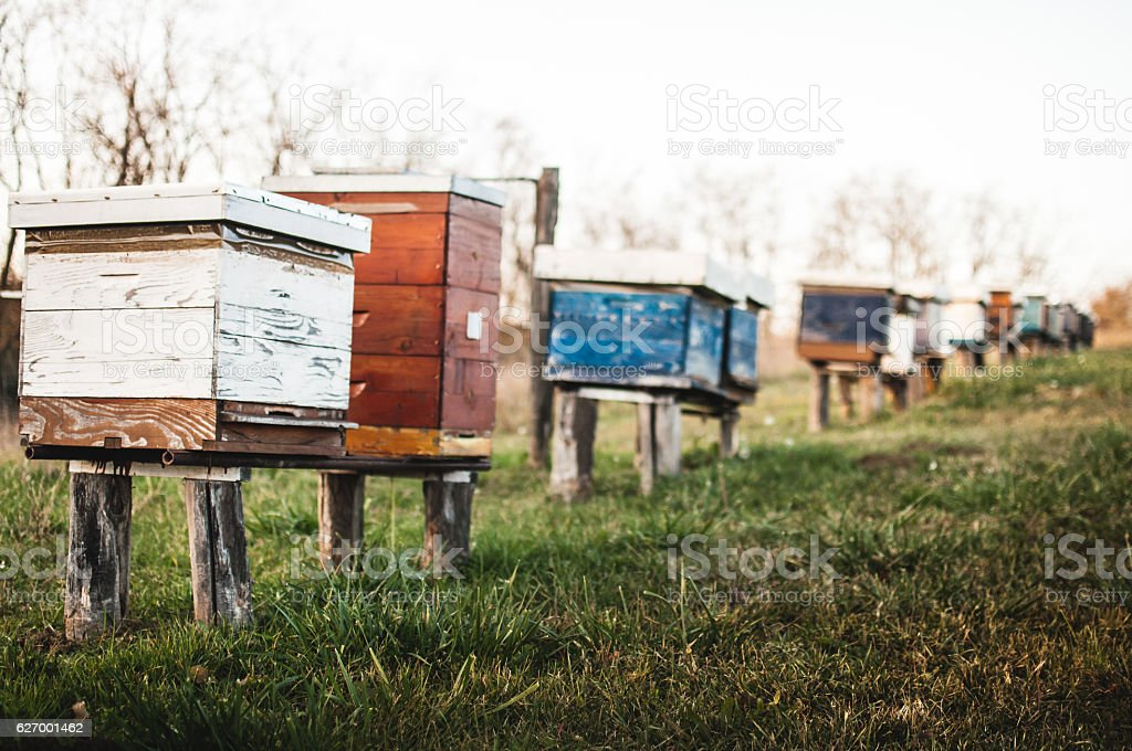 Beehives in nature stock photo