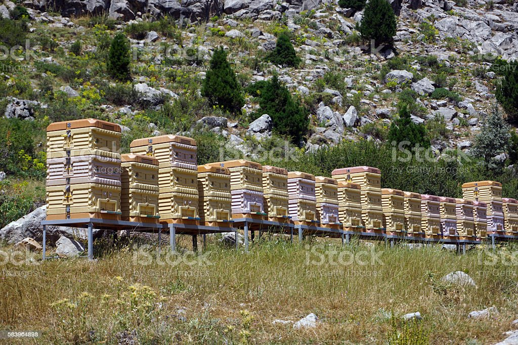 Beehives in the field stock photo