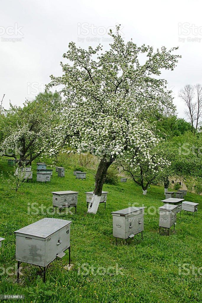 Bienenstöcke in den blühenden Garten Lizenzfreies stock-foto