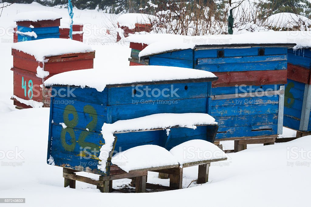 beehives in winter stock photo