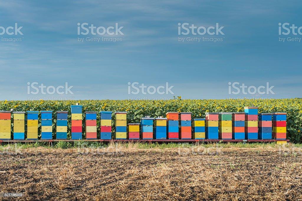 beehives royalty-free stock photo