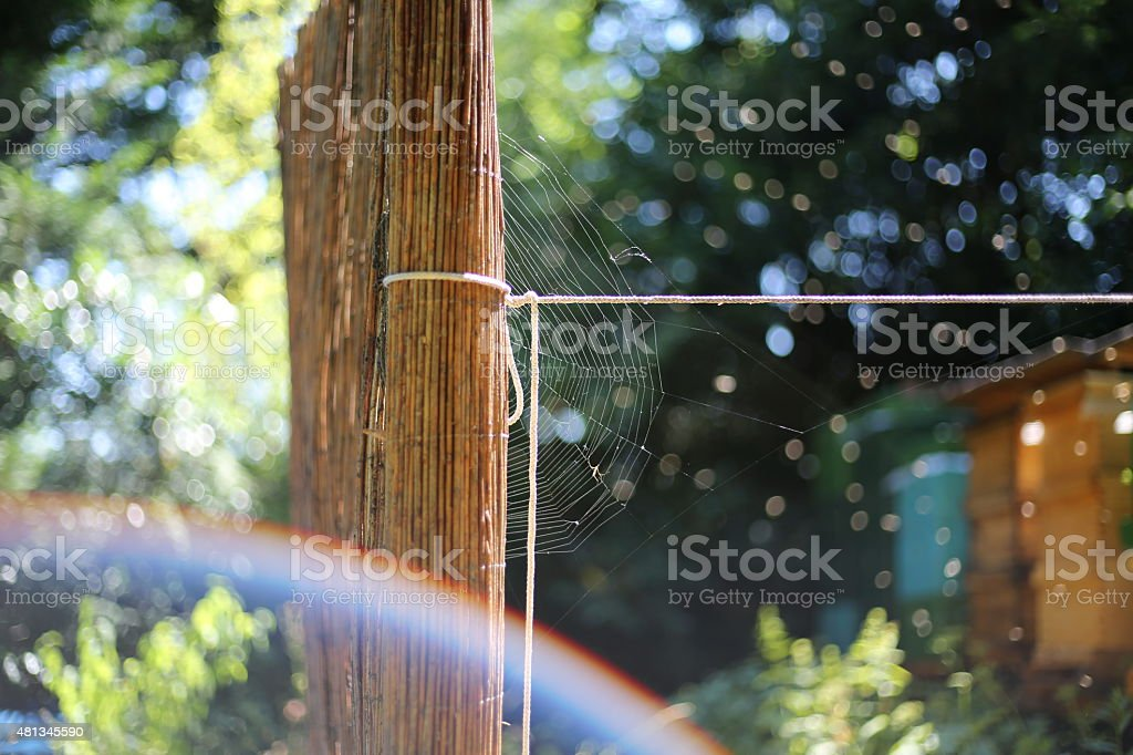 Beehives with a spidernet infront stock photo