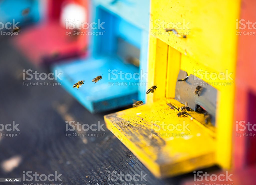 Beehives With Bees stock photo