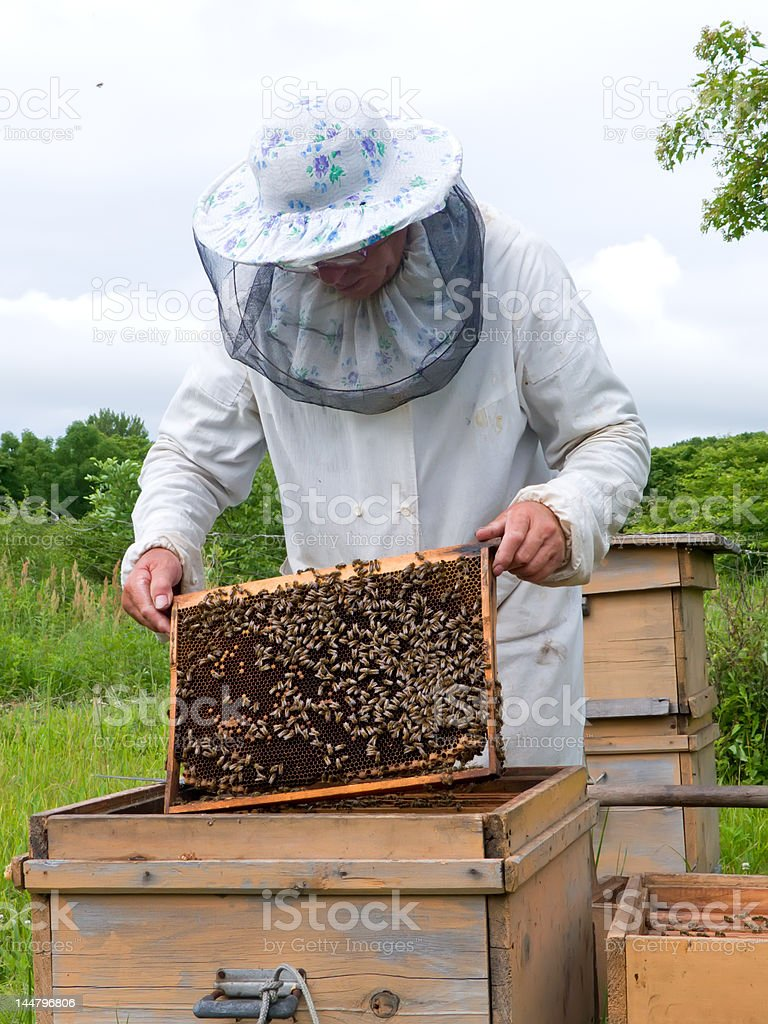 Beekeeper 15 stock photo