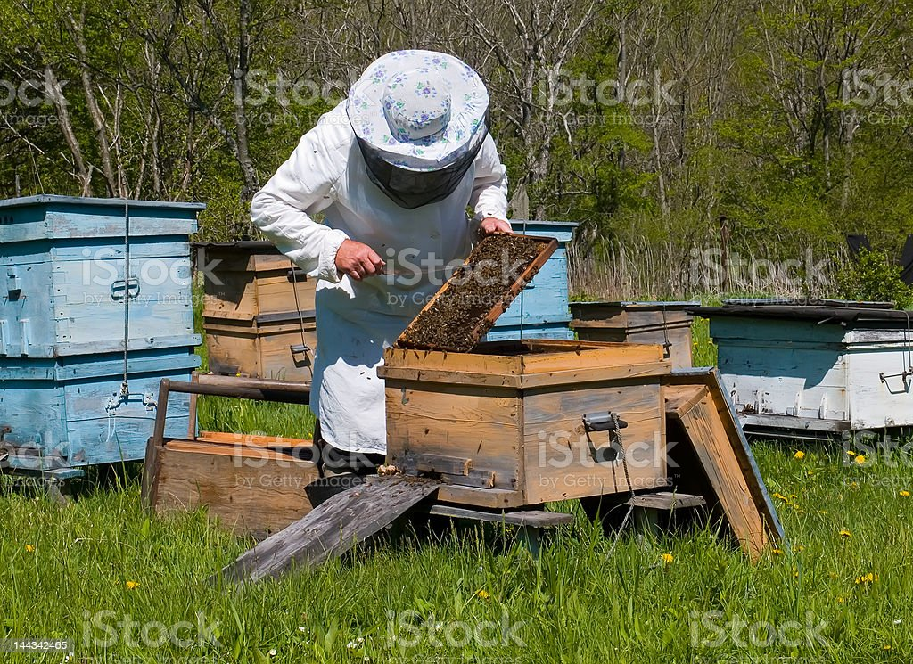 Beekeeper 2 stock photo