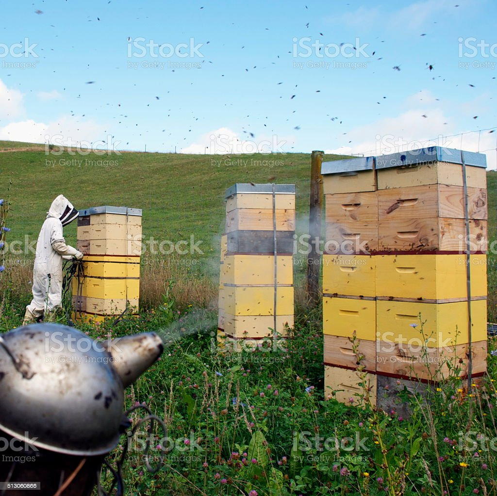 Beekeeper and Apiarist's  Smoker stock photo
