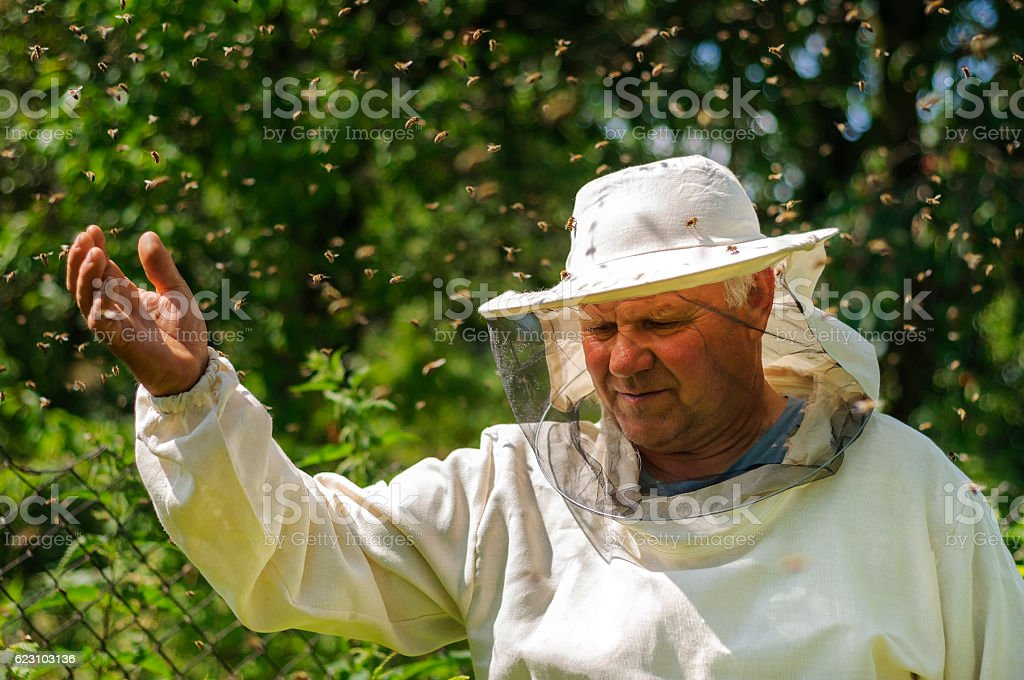 beekeeper and bee swarm, apiary beehive honey stock photo