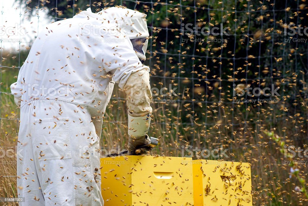Beekeeper and Beehives stock photo