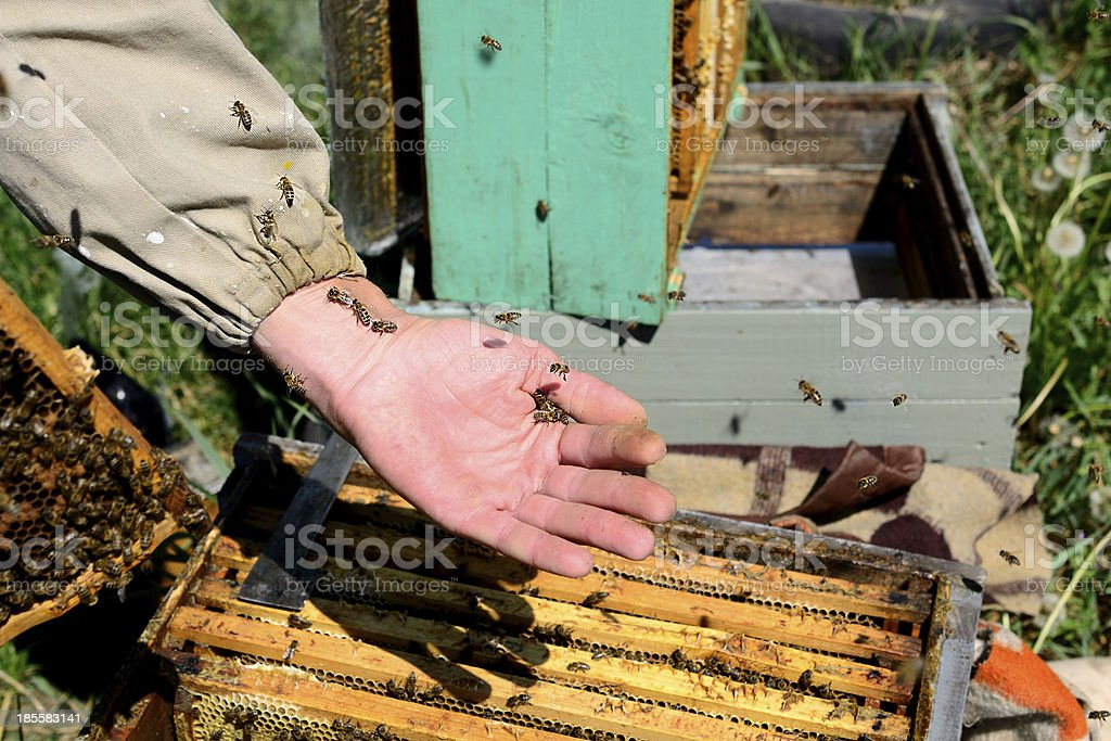 Beekeeper and his bees royalty-free stock photo