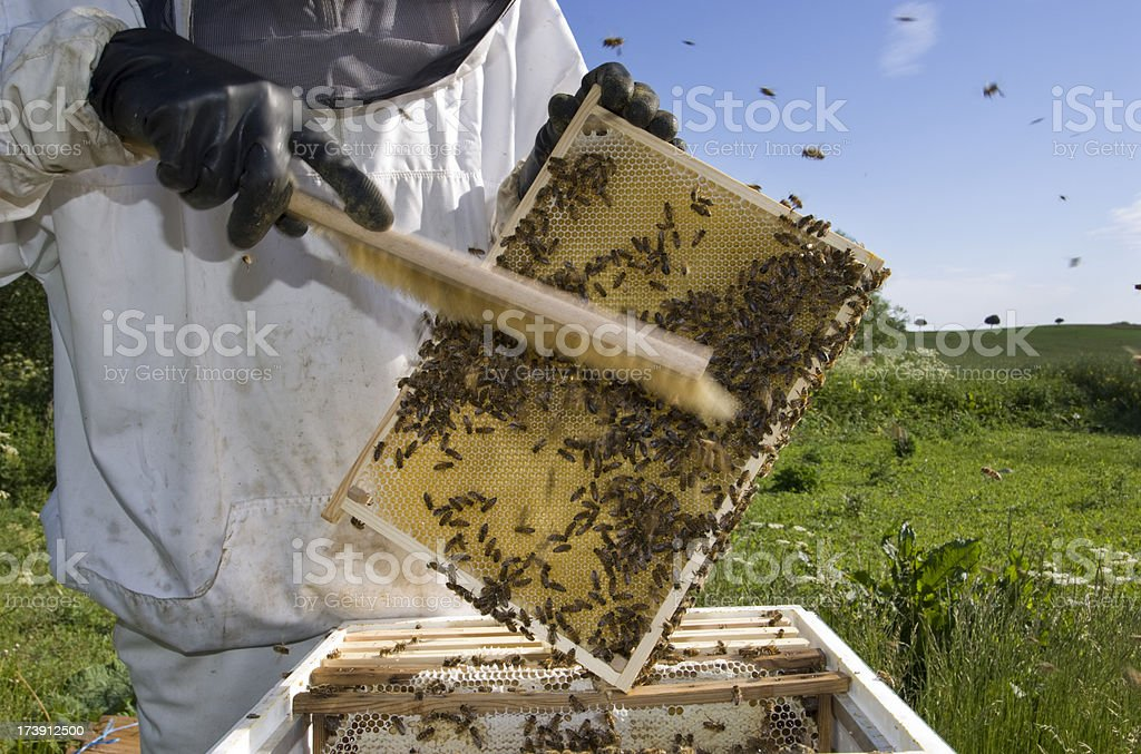 Beekeeper at Work royalty-free stock photo