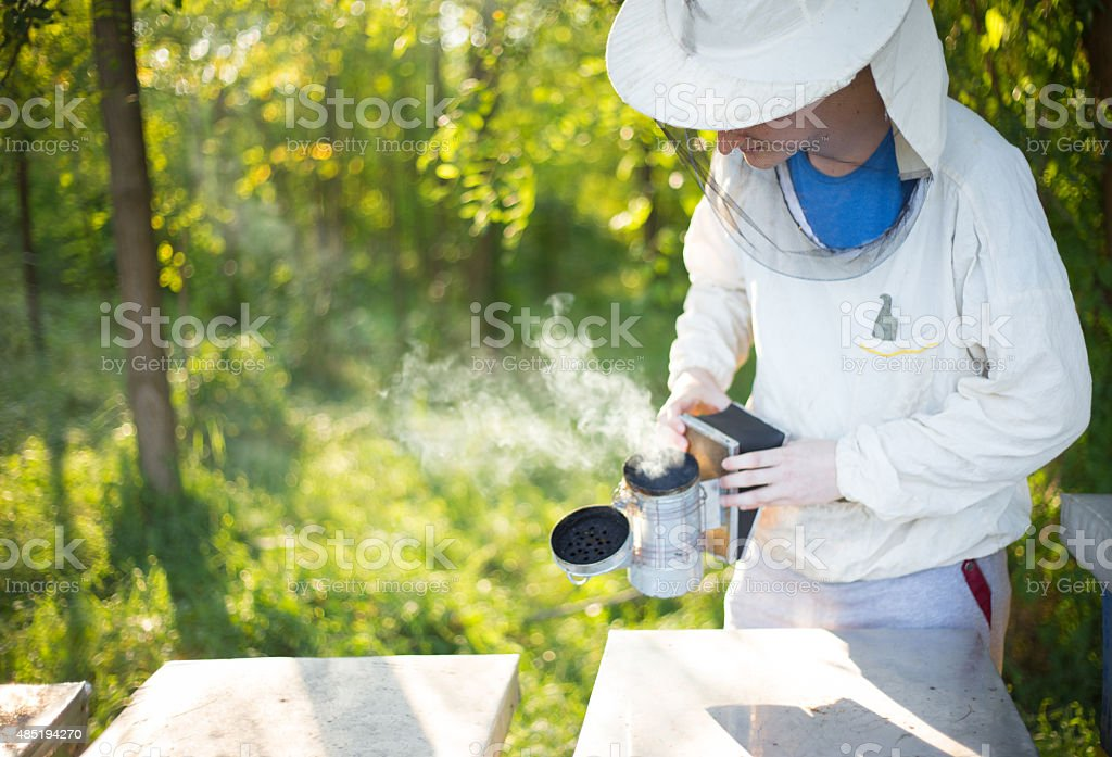 Beekeeper checking his bees. stock photo