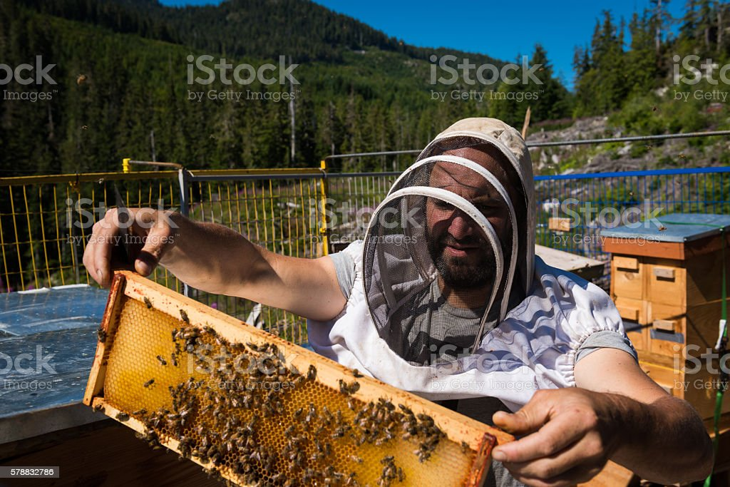 Beekeeper checking on a honeycomb stock photo